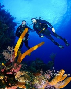 phoca_thumb_l_divers and coralby mike tougas
