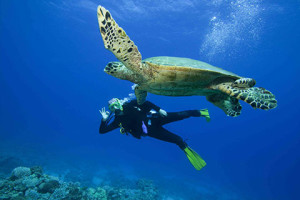 diving-excursions-turks-caicos